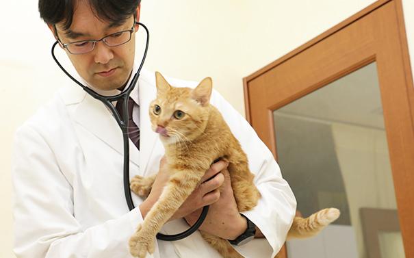 一般検査(血液検査、尿検査、糞便検査、X-ray検査)